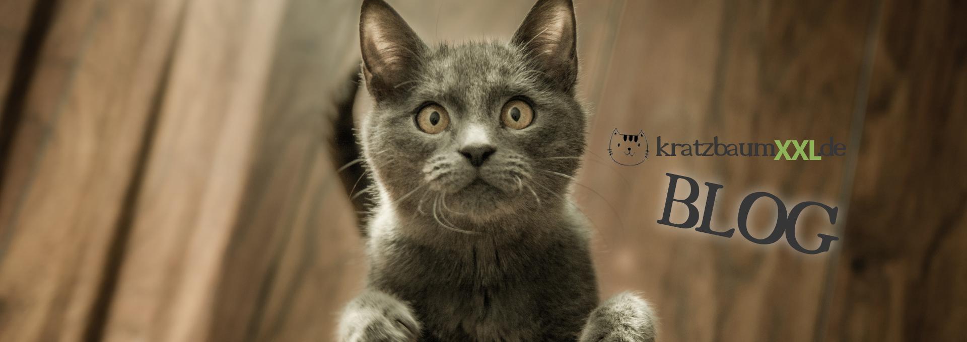 Spielzeug für Maine Coon Katze