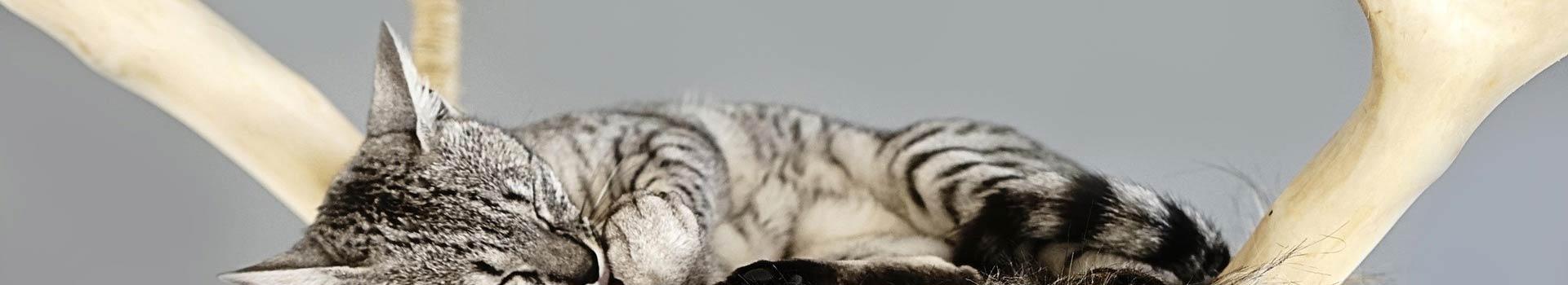 Designer Kratzbaum für Katzen