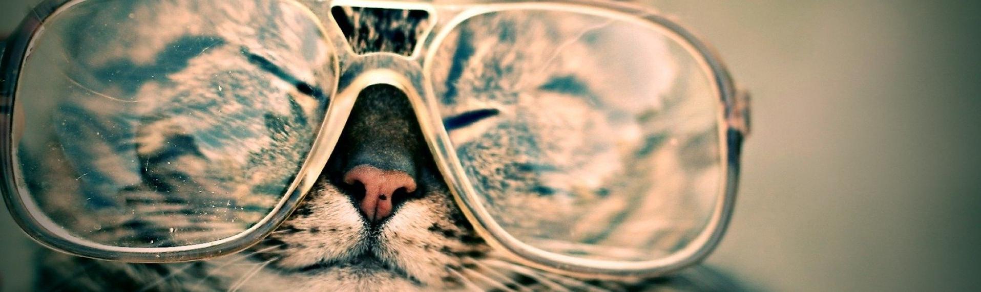 Das beste Katzenstreu - Katzenstreu unter der Lupe